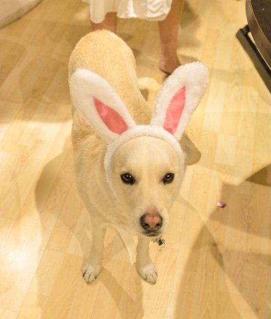 2013 04 12 Bunny Ears-5