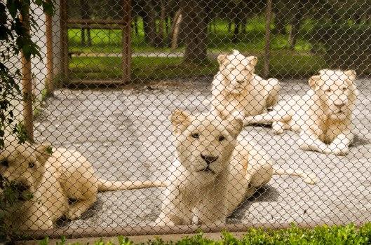 2013 08 16 Watching Animals-4