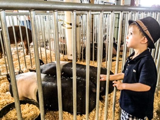2014 07 16 County Fair-8